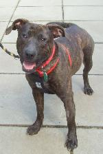 Click here to find out more about Jack (Staffy xLab)