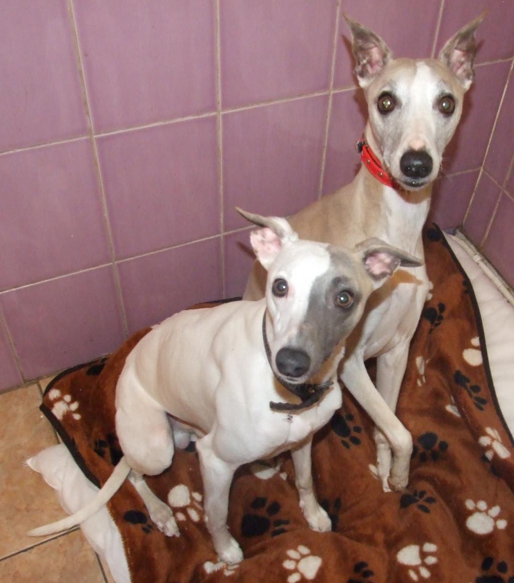 Rescue Dogs Fife Area