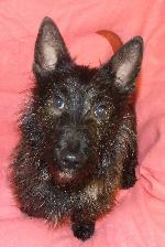 Click here to find out more about Perry (Scottie x)