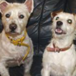 Second Chance Kennels - Rescue Dogs Fife