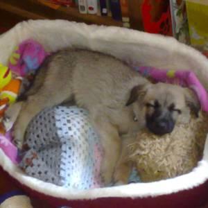 Second Chance Dog Rescue Scotland
