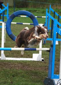 Agility at Camperdown Park.